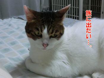 2012_06160091.jpg