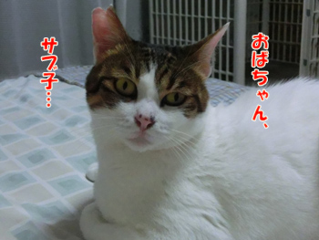 2012_06160093.jpg