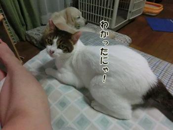 2012_06240152.jpg