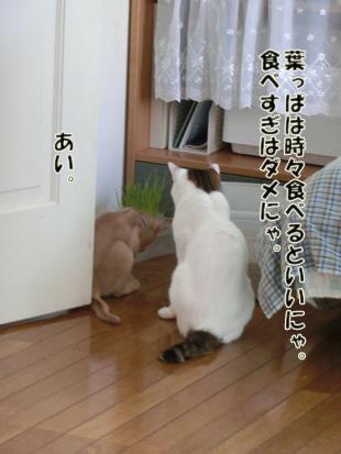 2012_07110234.jpg