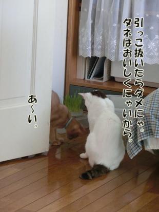 2012_07110236.jpg