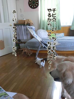 2012_07110242.jpg