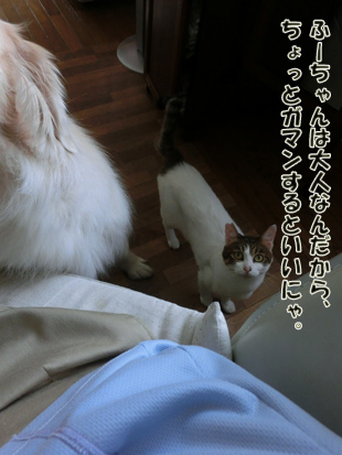 2012_07110257.jpg