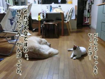 2012_07180016.jpg
