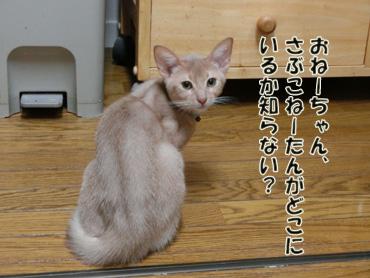 2012_07230072.jpg
