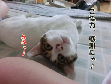 2012_07230094.jpg