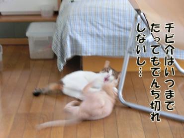 CIMG2703.jpg
