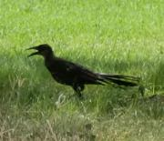 bird08301202.jpg