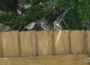 birds1203.jpg