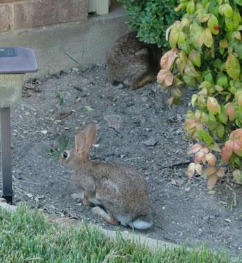 bunny1201.jpg