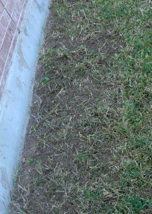 crabgrass1207.jpg