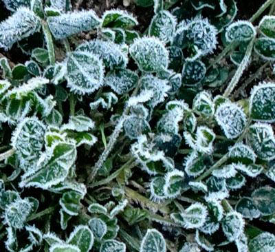 frost10221301.jpg