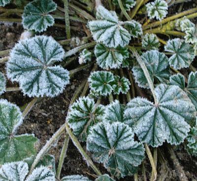 frost10221302.jpg