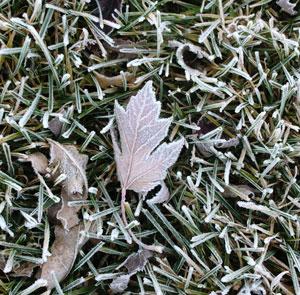 frost11051302.jpg