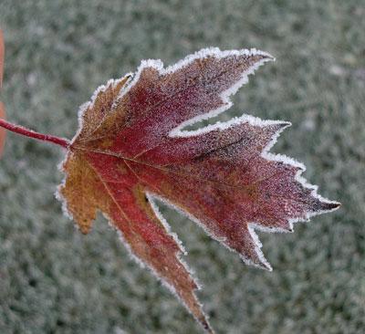 frost11051304.jpg