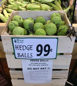 hedgeballs1.jpg