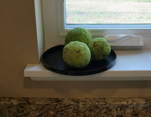 hedgeballs2.jpg