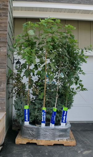 planting1303.jpg