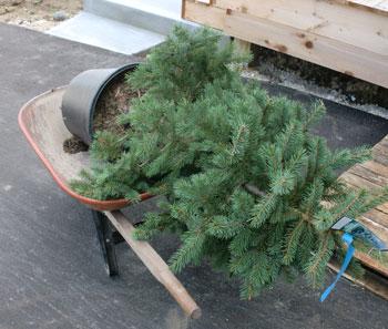 planting1304.jpg