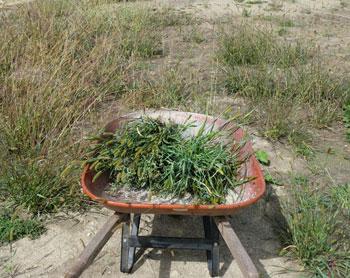 planting1305.jpg