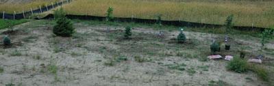 planting1309.jpg