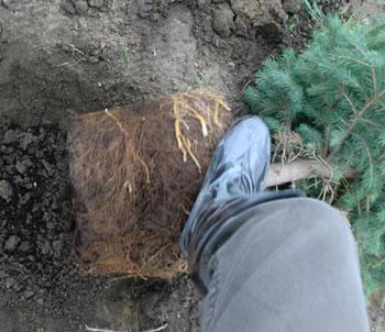 planting1312.jpg