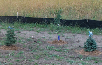 planting1315.jpg