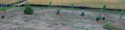 planting1316.jpg
