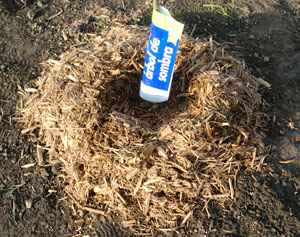 planting1317.jpg
