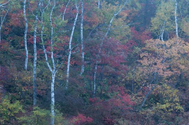 秋のはじまり3