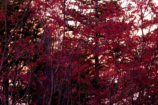 秋のはじまり4