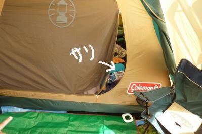 20120429阿蘇いこいの村 (10)