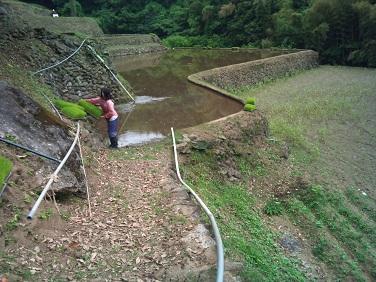 20120602田植え (4)