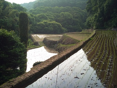 20120602田植え (11)