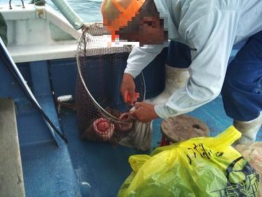 20120623船釣り西海 (5)