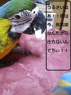 DSC_0876.jpg