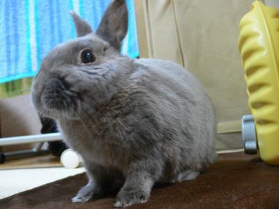 1万6千円ウサギ