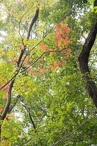 森林公園-6