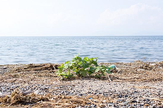 東琵琶湖2-1