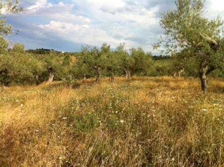 アサクラ農園2