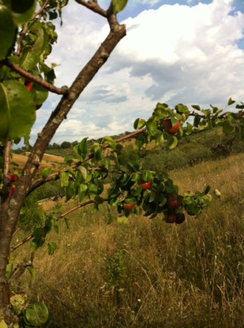 アサクラ農園8