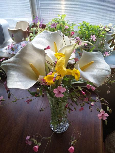 514エンジェル王女への花