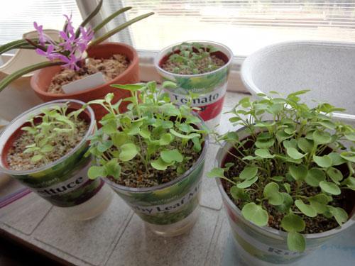 家庭菜園の始まり