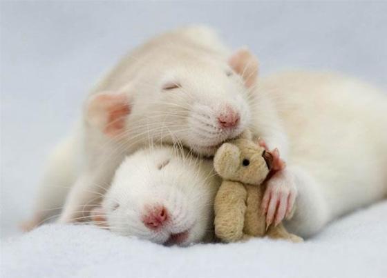 ネズミ テディーベア