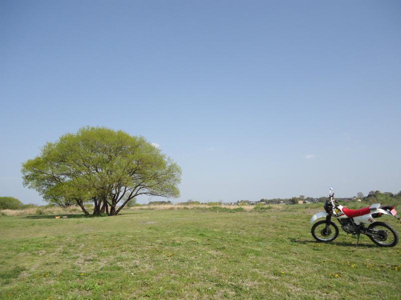 散バイク (4)