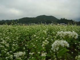 1彼岸花とにんにくの芽にてね? (3)