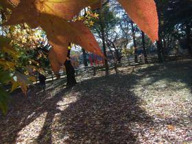 91ポニー公園 (1)
