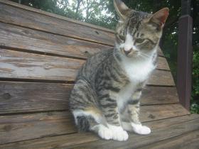 6月ラベンダー猫
