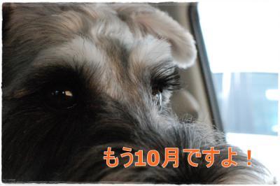 DSC_0255_20121008161832.jpg