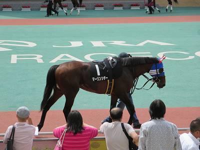 中京競馬場のパドック2